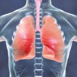 Interesting Facts About Human Respiratory System
